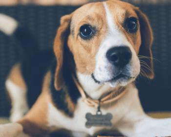 Hundefutter für sensible Hunde